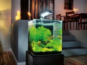 klein aquarium