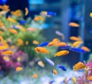 Grote aquariums
