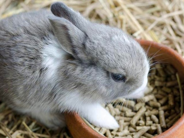 beste konijnenvoer