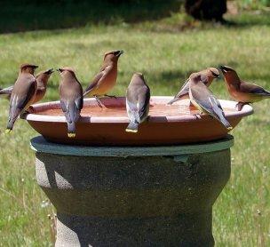 beste vogelbadjes