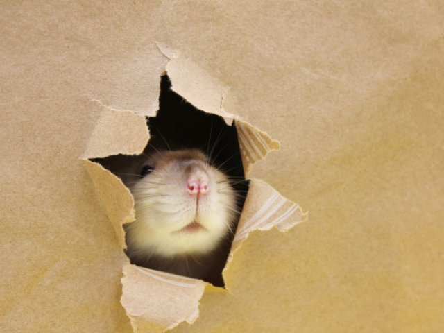 Beste muizenvallen