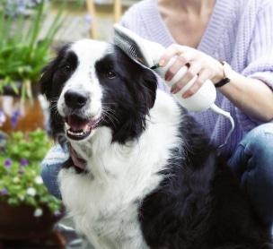 Beste waterblazers voor honden