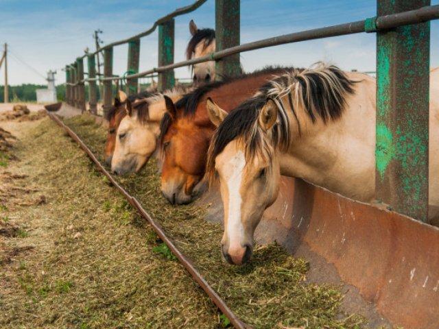 Beste voerbakken voor paarden