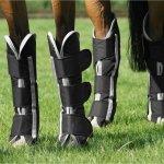 Beste transportbeschermers voor paarden